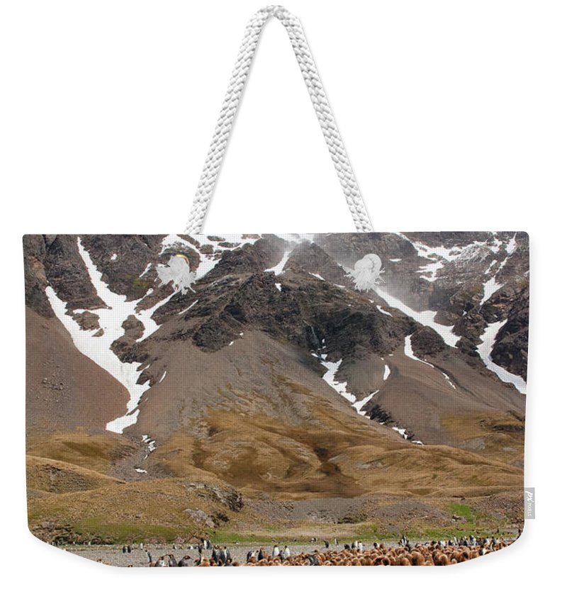 Scenics Weekender Tote Bag featuring the photograph King Penguins Aptenodytes Patagonicus by Gabrielle Therin-weise