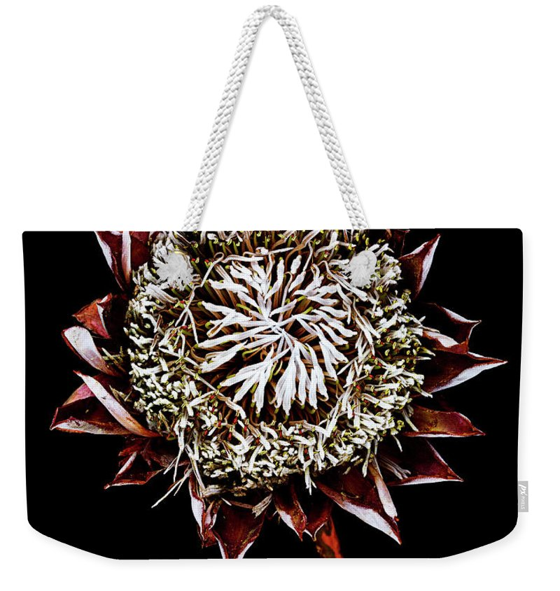 Black Background Weekender Tote Bag featuring the photograph King Protea Top by Chris Stein