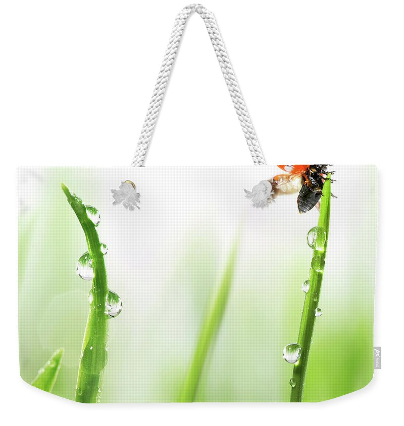Hanging Weekender Tote Bag featuring the photograph Ladybug On Green Grass by Sbayram