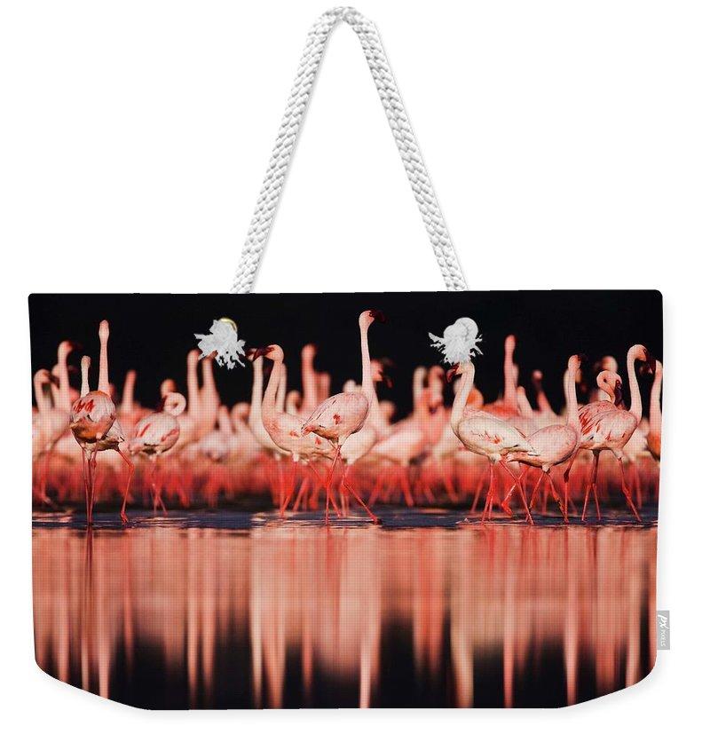Kenya Weekender Tote Bag featuring the photograph Lesser Flamingos Phoenicopterus Ruber by Jami Tarris