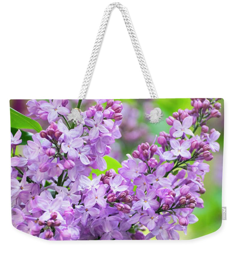 Lilac Flowers Weekender Tote Bag featuring the photograph Lilac Flowers by Christina Rollo