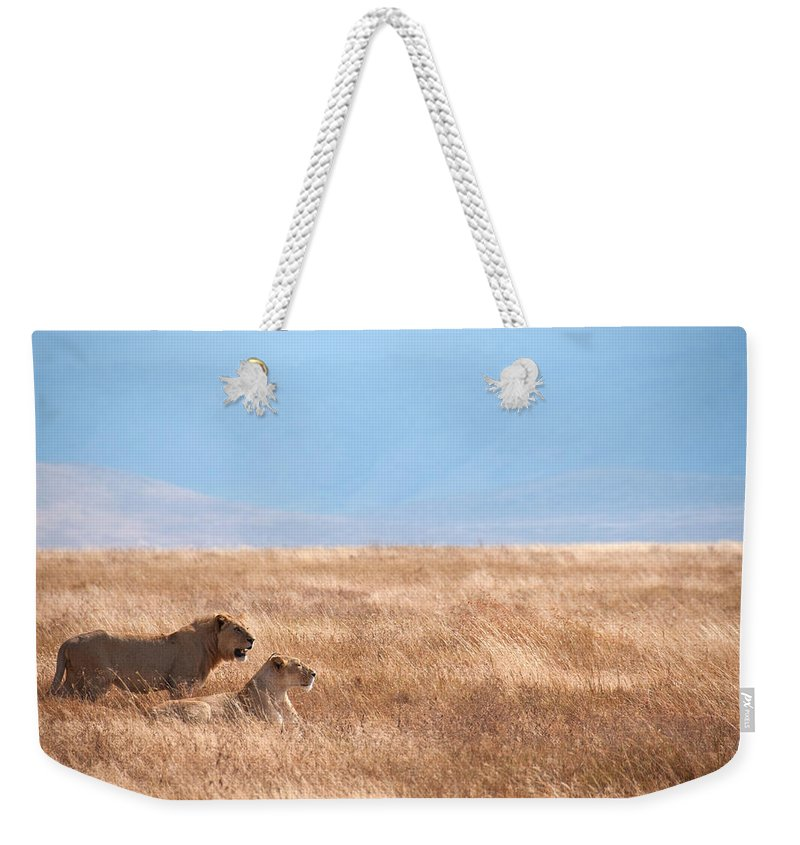 Scenics Weekender Tote Bag featuring the photograph Lion Couple In Ngorongoro Crater by Ceneri