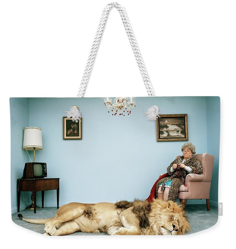 Pets Weekender Tote Bag featuring the photograph Lion Lying On Rug, Mature Woman Knitting by Matthias Clamer
