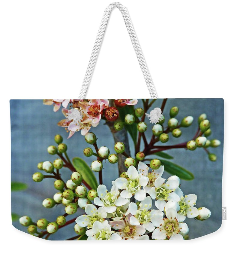 Bud Weekender Tote Bag featuring the photograph Little Star Like Buds by Steve Taylor Photography