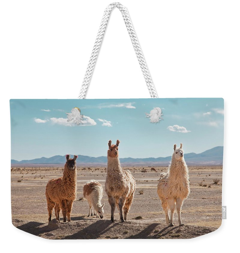 Shadow Weekender Tote Bag featuring the photograph Llamas Posing In High Desert by Kathrin Ziegler