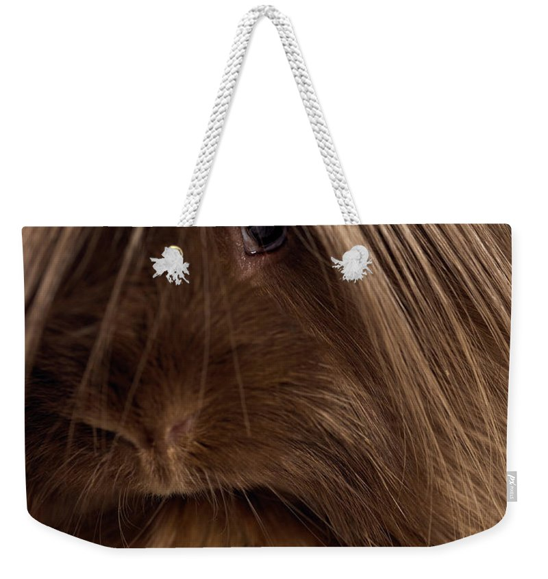Pets Weekender Tote Bag featuring the photograph Long Haired Guinea Pig, Close-up by Michael Blann