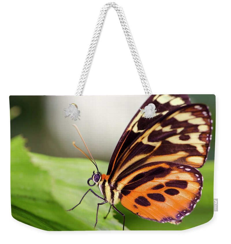 Flowerbed Weekender Tote Bag featuring the photograph Macro Insect Common Tiger Glassywing by Elementalimaging