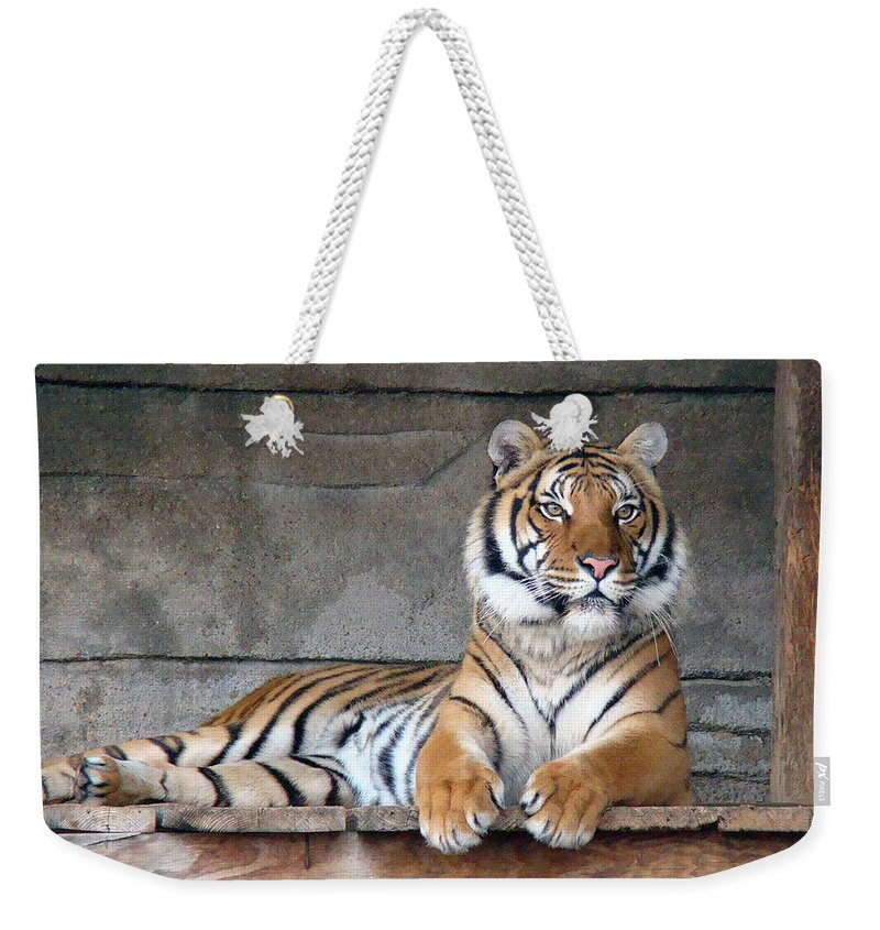 Animal Themes Weekender Tote Bag featuring the photograph Malayan Tiger by Photography By P. Lubas