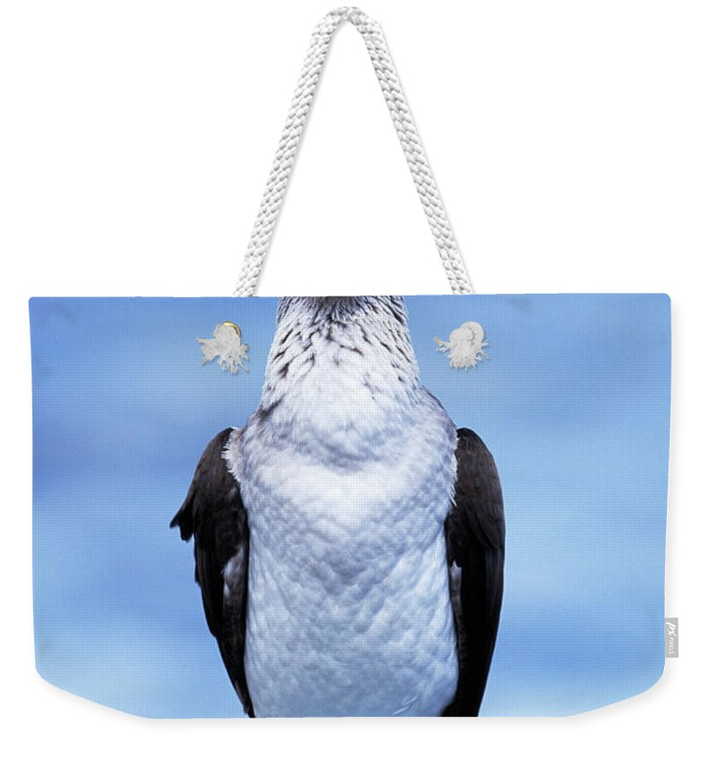 Animal Themes Weekender Tote Bag featuring the photograph Masked Booby Sula Dactylatra Galapagos by Art Wolfe