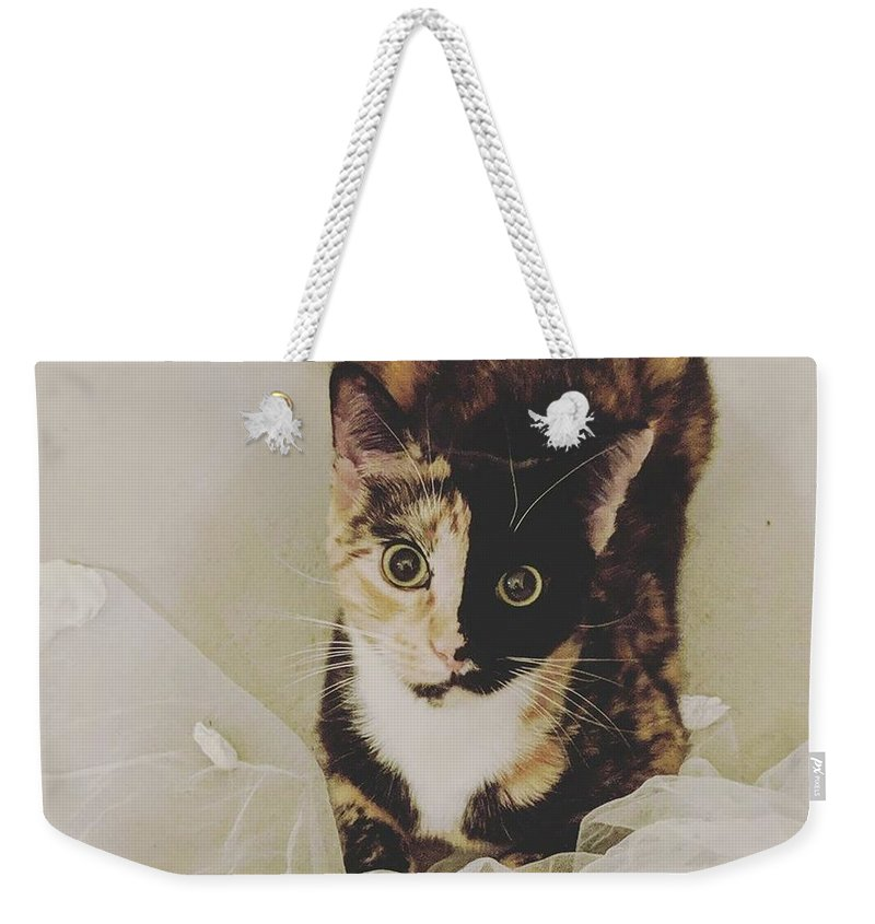 Cute Cat Weekender Tote Bag featuring the photograph Meet Star by Star And Ray