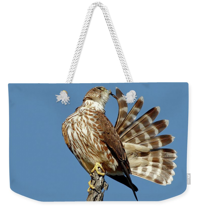 Animal Themes Weekender Tote Bag featuring the photograph Merlins Grooming Session by Bmse