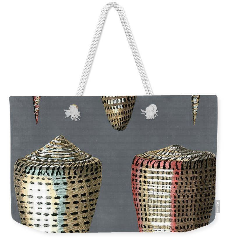 Coastal Weekender Tote Bag featuring the painting Midnight Shells I by Pierre Redoute