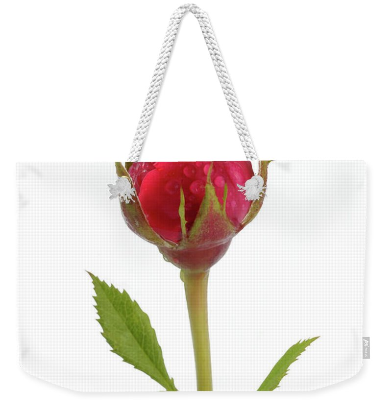 White Background Weekender Tote Bag featuring the photograph Miniature Pink Rose Bud With Water by Rosemary Calvert