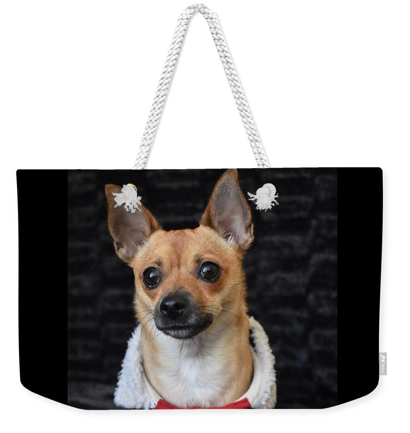 Chihuahua Weekender Tote Bag featuring the digital art Miracle by Cassidy Marshall