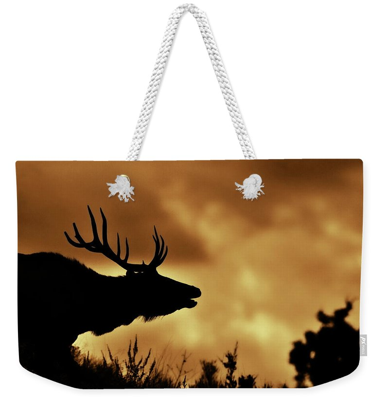 Animal Themes Weekender Tote Bag featuring the photograph Moose At Sunrise by Photo By James Keith