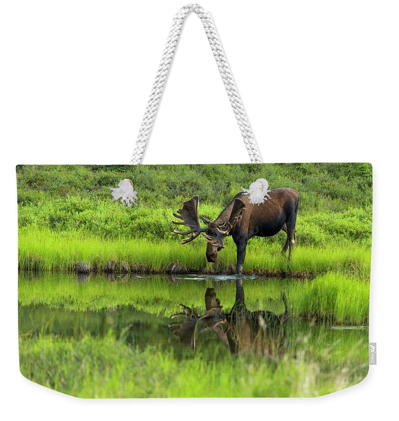 Alaska Weekender Tote Bag featuring the photograph Morning Isolation by Chad Dutson