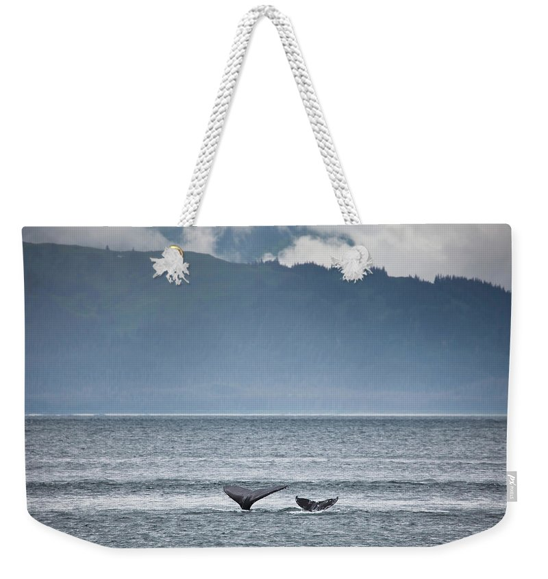 Water's Edge Weekender Tote Bag featuring the photograph Mother And Calf Whale Tails Megaptera by Blake Kent / Design Pics