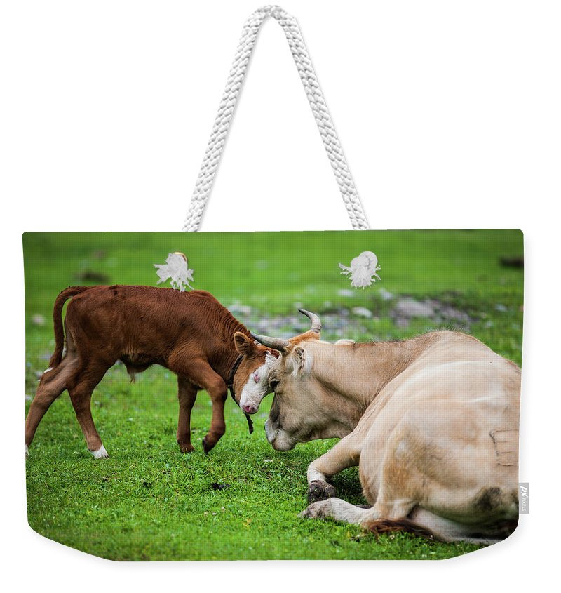 Grass Weekender Tote Bag featuring the photograph Mother And Son by Zhouyousifang