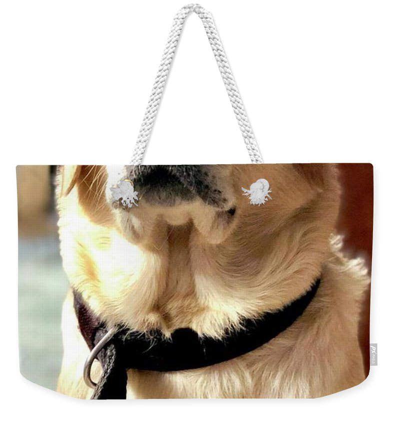 Labrador Dog Weekender Tote Bag featuring the photograph Labrador Dog by Arun Jain