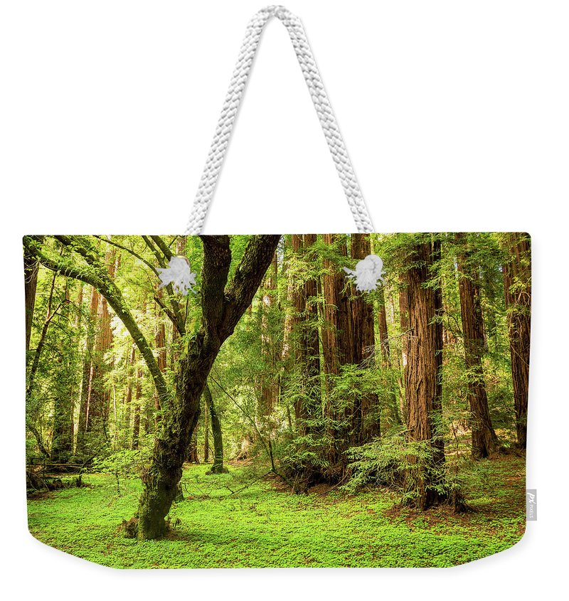 Tranquility Weekender Tote Bag featuring the photograph Muir Woods Forest by By Ryan Fernandez
