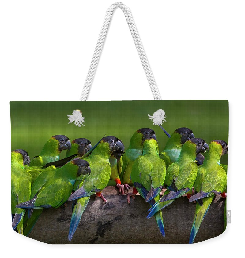 Vertebrate Weekender Tote Bag featuring the photograph Nanday Parakeets Perched In A Row In by Mint Images - Art Wolfe