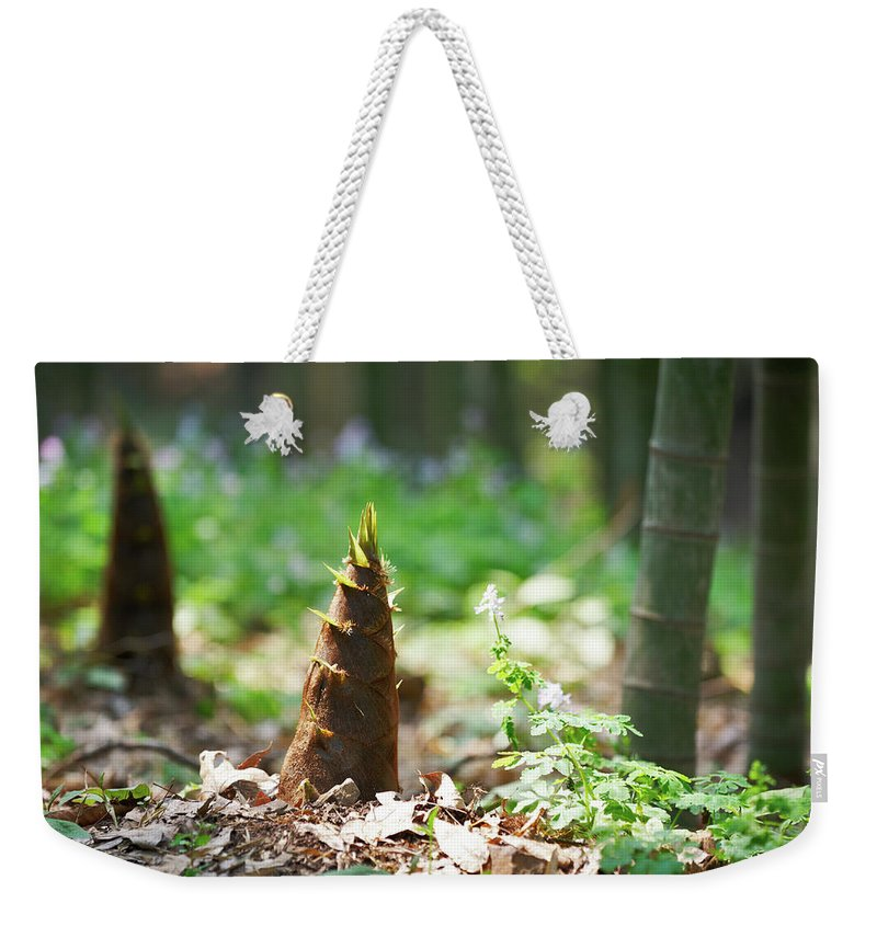 Chinese Culture Weekender Tote Bag featuring the photograph New Bamboo Shoots by Sandsun