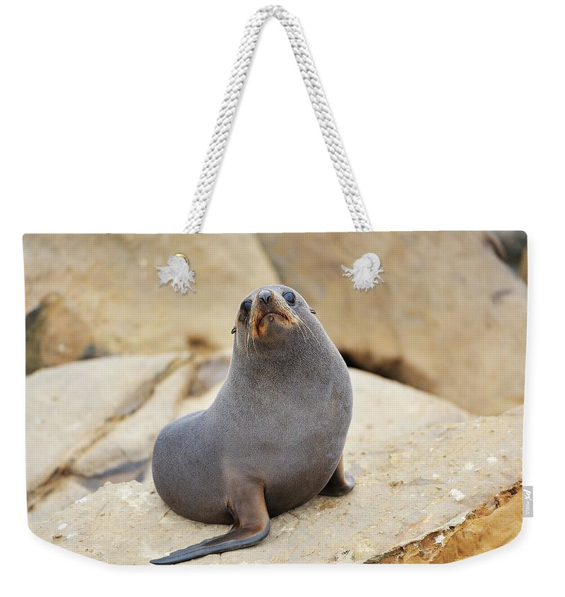 Alertness Weekender Tote Bag featuring the photograph New Zealand Fur Seal, Arctocephalus by Raimund Linke