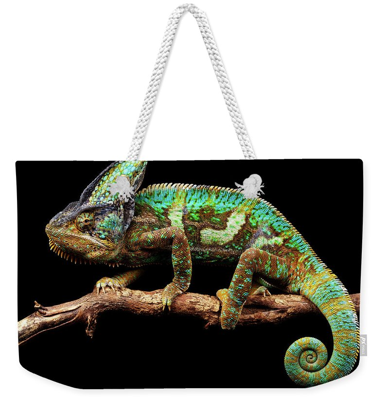 Animal Themes Weekender Tote Bag featuring the photograph Nice And Slow by Markbridger