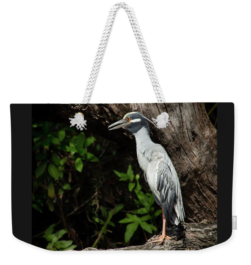 Bird Weekender Tote Bag featuring the photograph Yellow Crowned Night Heron Lookout by Sabrina L Ryan