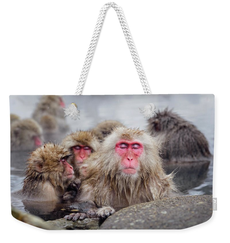 Animal Themes Weekender Tote Bag featuring the photograph Nihon Zaru Japanese Snow Monkey by Gisle Daus