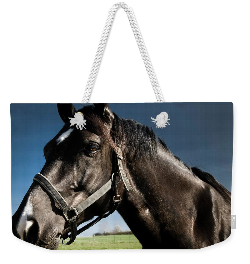 Horse Weekender Tote Bag featuring the photograph On The Meadow by Pixalot