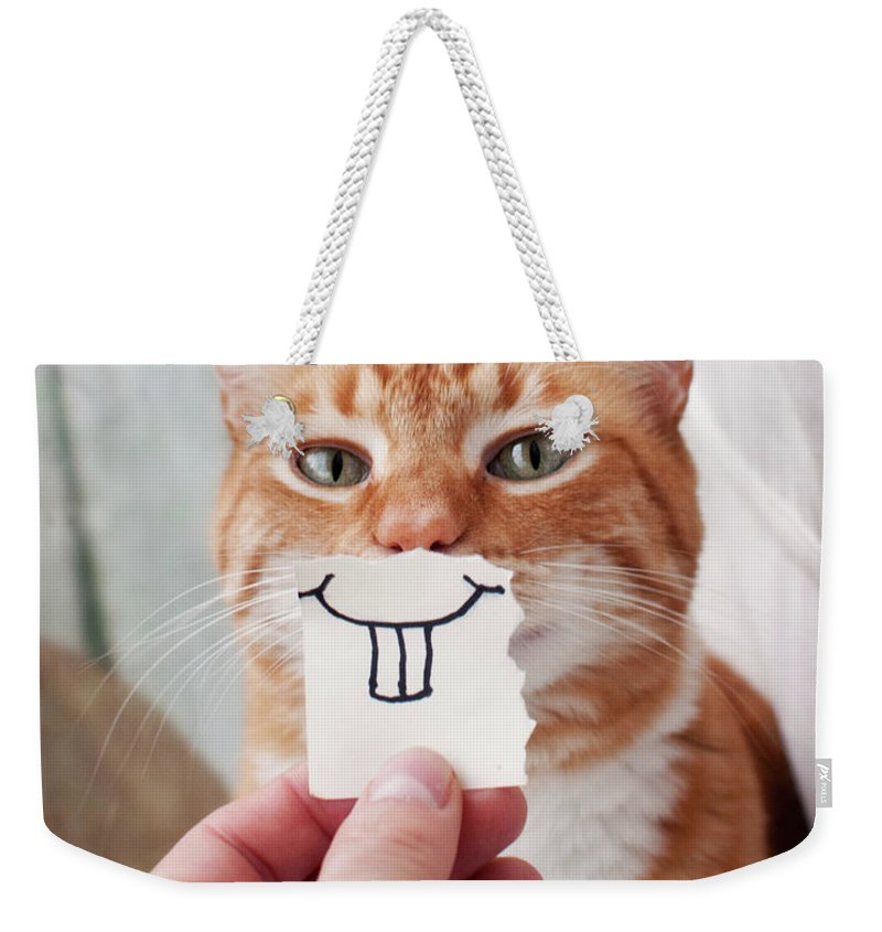 Pets Weekender Tote Bag featuring the photograph Orange Cat Face by Jtsiemer