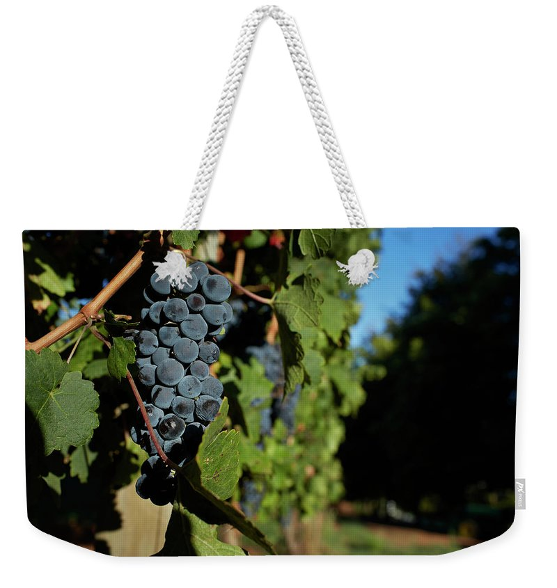 Stellenbosch Weekender Tote Bag featuring the photograph Overripe Grapes Hanging On Vine by Klaus Vedfelt