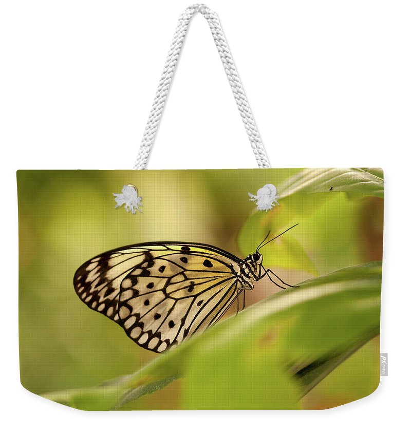 Natural Pattern Weekender Tote Bag featuring the photograph Paper Kite Butterfly by Photos By Jay Bee