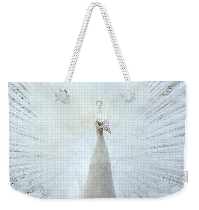 Indian Peafowl Weekender Tote Bag featuring the photograph Pavone by Marco Pozzi Photographer