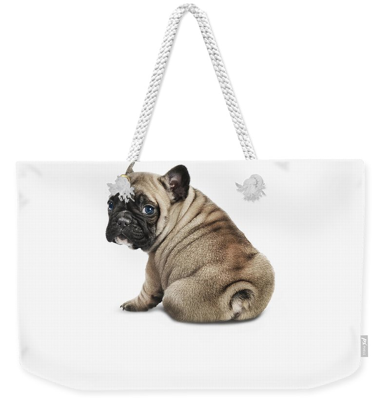 Pets Weekender Tote Bag featuring the photograph Pedigree French Bulldog Against A White by Andrew Bret Wallis