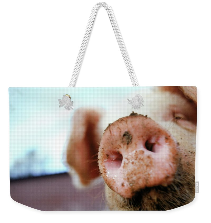 Pig Weekender Tote Bag featuring the photograph Pig by Matt Carr