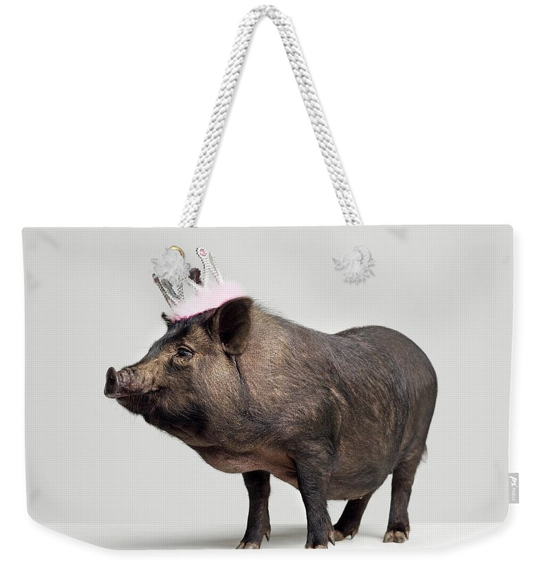 Crown Weekender Tote Bag featuring the photograph Pig With Toy Crown On Head, Studio Shot by Roger Wright