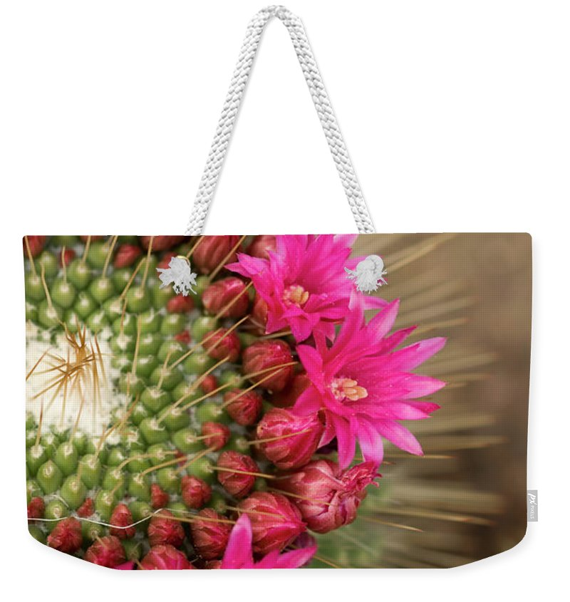 Bud Weekender Tote Bag featuring the photograph Pink Cactus Flower In Full Bloom by Zepperwing