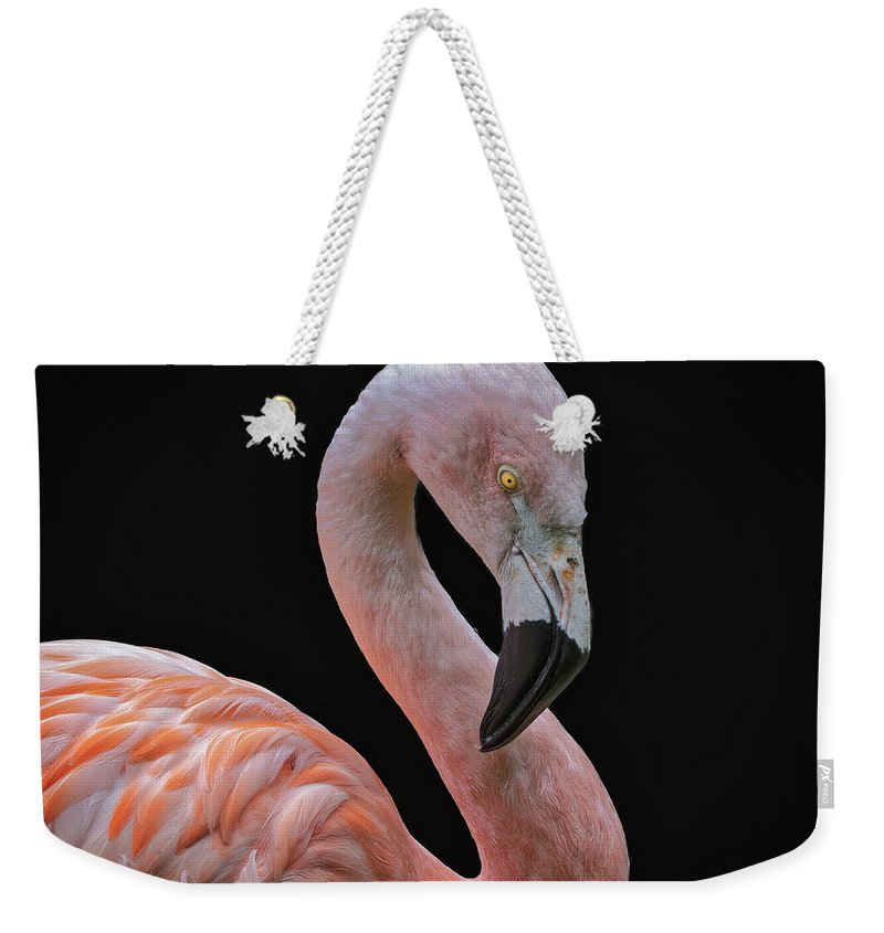 Pink On Black Weekender Tote Bag featuring the photograph Pink Flamingo 5 by Mitch Shindelbower