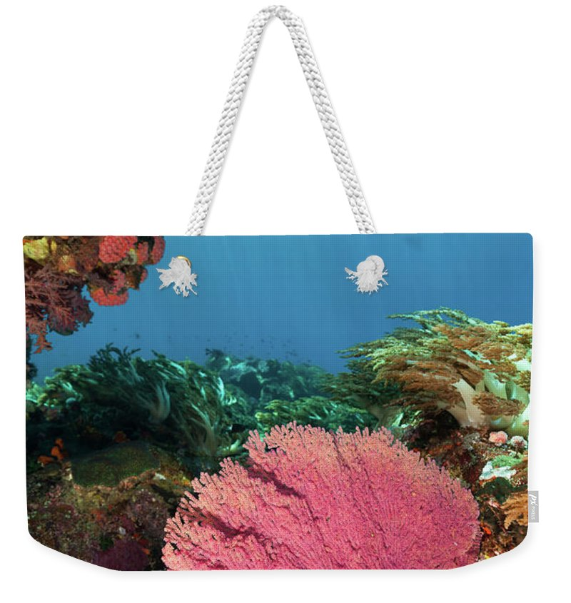 Underwater Weekender Tote Bag featuring the photograph Pink Gorgonian Sea Fan, Pura Island by Ifish