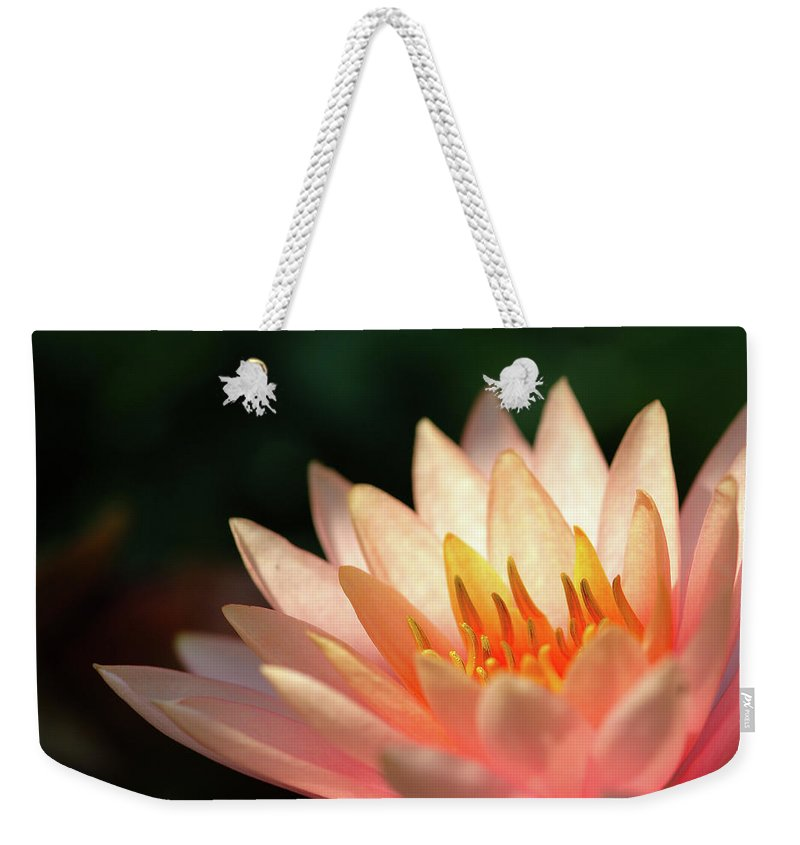 Flowerbed Weekender Tote Bag featuring the photograph Pink Lotus by Pailoolom