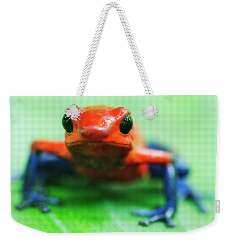 Animal Themes Weekender Tote Bag featuring the photograph Poison Dart Frog by Jeremy Woodhouse