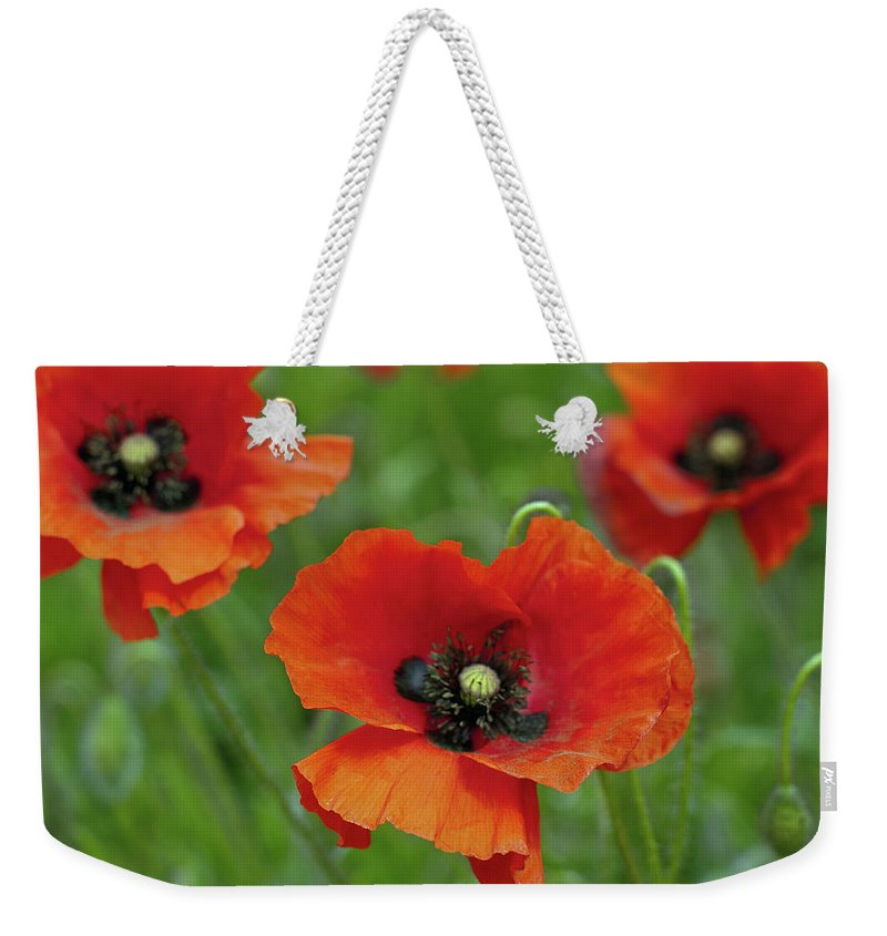 Petal Weekender Tote Bag featuring the photograph Poppies by Photo By Judepics