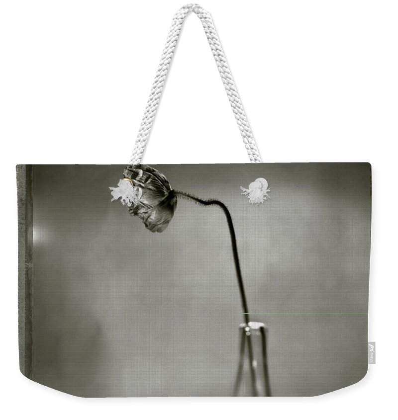 Fragility Weekender Tote Bag featuring the photograph Poppy - Just Opened by T Scott Carlisle