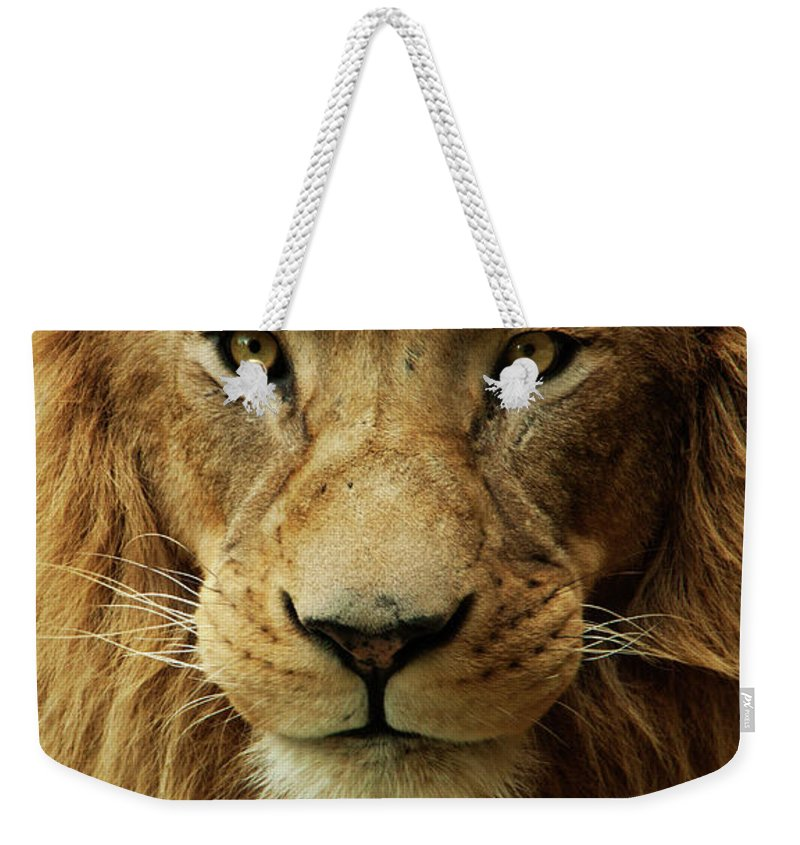 Animal Themes Weekender Tote Bag featuring the photograph Portrait Male African Lion by Brit Finucci