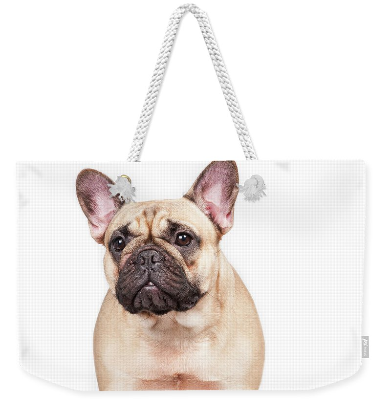 Pets Weekender Tote Bag featuring the photograph Portrait Of A French Bulldog by @hans Surfer