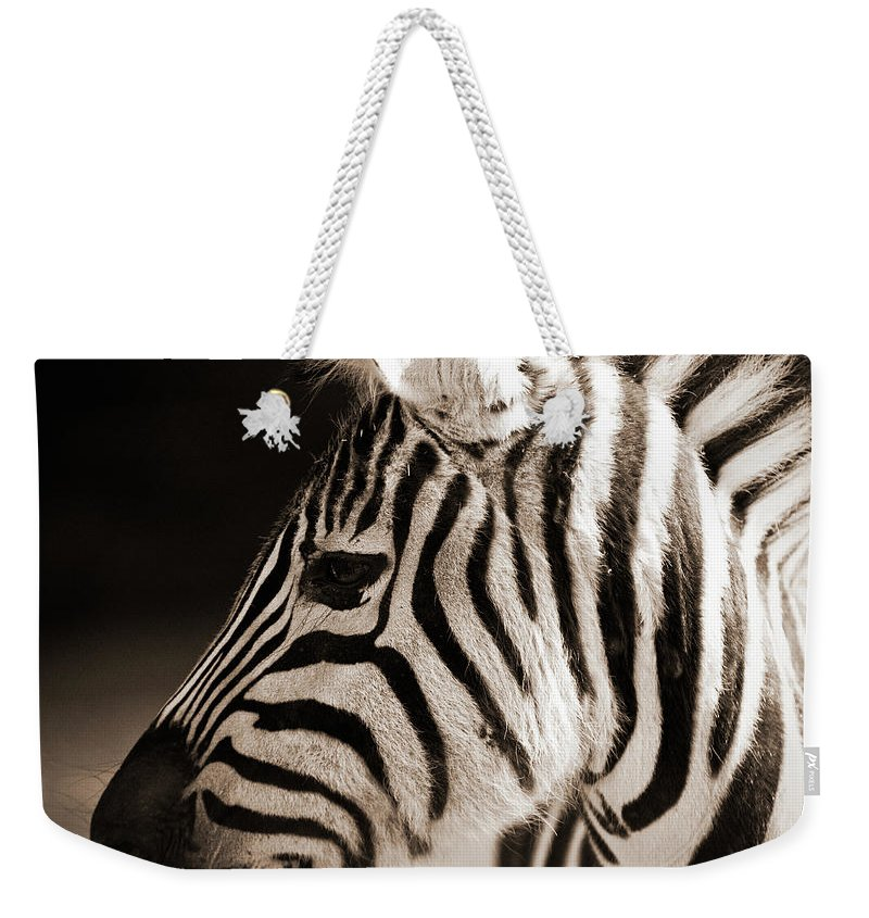 Black Color Weekender Tote Bag featuring the photograph Portrait Of A Young Zebra by Cruphoto