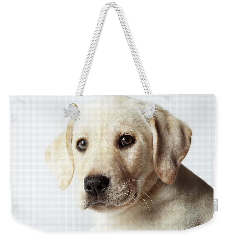 White Background Weekender Tote Bag featuring the photograph Portrait Of Blond Labrador Retriever by Uwe Krejci
