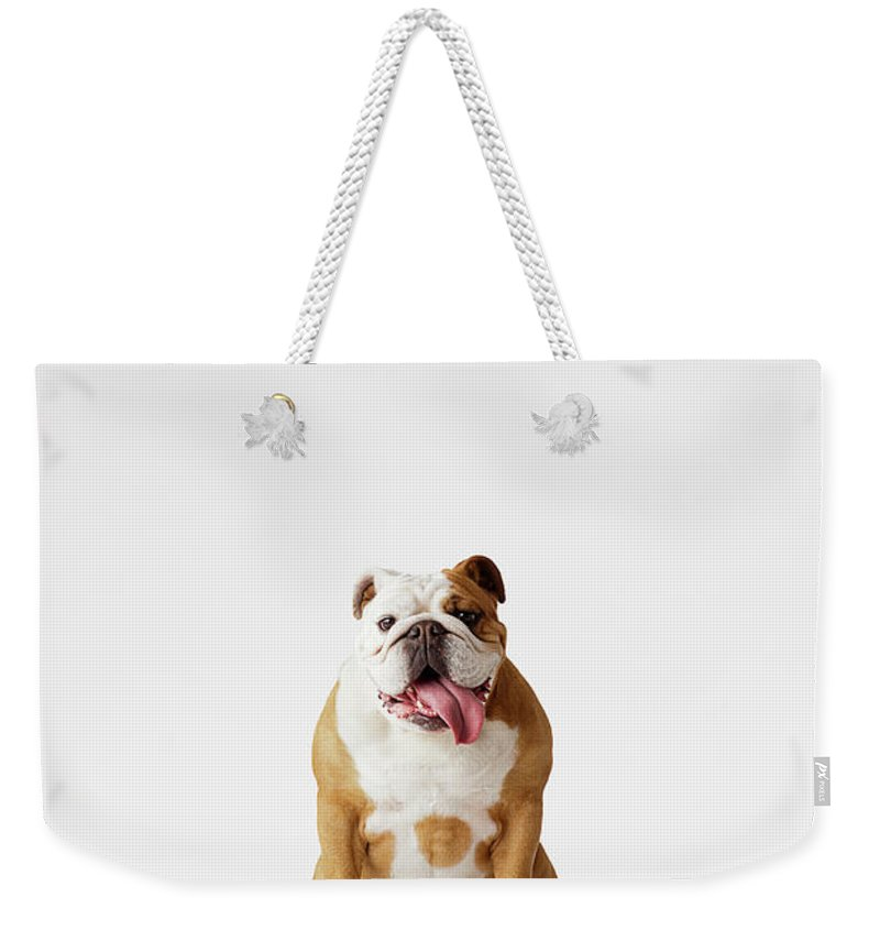 Pets Weekender Tote Bag featuring the photograph Portrait Of British Bulldog Sitting by Compassionate Eye Foundation/david Leahy